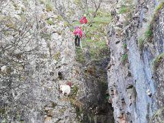 50 metre yükseklikte mahsur kalan keçi kurtarıldı
