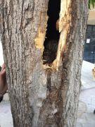 Ağaç oyuğuna yavrulayan anne kediyi vatandaş sahiplendi