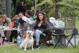 Köpek ırkları Eskişehir'de yarıştı