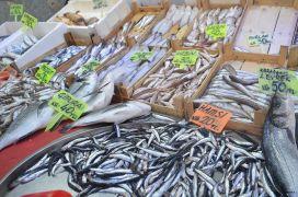 Balık sezonu açıldı kaçak satıcılara dikkat