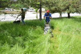 Boş arazilerde ve parklarda ot temizliği