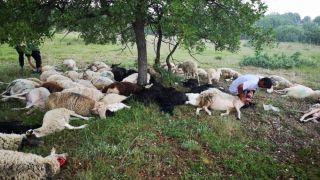 Eskişehir'de 55 koyun yıldırım sebebiyle telef oldu