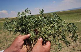 (Özel ) Karaborsaya düşen zirai ilaç, çiftçinin belini büküyor