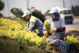 Tepebaşı Belediyesi 225 bin adet çiçek üretimi ile kenti süsledi