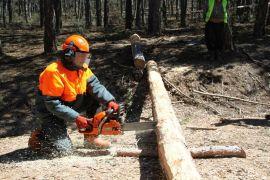 Ormancılıkta yeni dönem E-satış