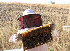 Arı fobisi işe dönüştü yılda 750 kilo bal üretiyor