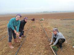 Eskişehir'de kadın çiftçiler için 'Lavanta' alternatif ürün
