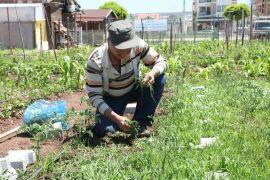 Hobi Bahçelerinin yeni dönem sahipleri belirlenecek