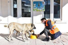İnönü Belediyesi sokak hayvanlarına mama ve sevgi desteğini sürdürüyor
