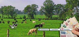 Hayvan sahiplerine 271 bin lira hastalık tazminatı ödendi