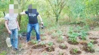 Başkasına ait bahçede yetiştirdiği yasadışı kenevirleri sularken yakalandı