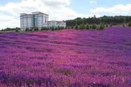 ESOGÜ Meşelik kampüsüne 30 bin zufa bitkisi ekildi