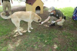 Eskişehir polisi sokak hayvanlarını unutmadı