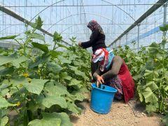 (ÖZEL) Bu yöntem sayesinde vatandaşlar meyve ve sebzeleri ucuza satın alıyor