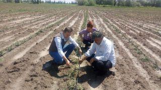 Dolu yağışında arazisi etkilenen çiftçiler hasar tespiti başvurusu yapabilecek